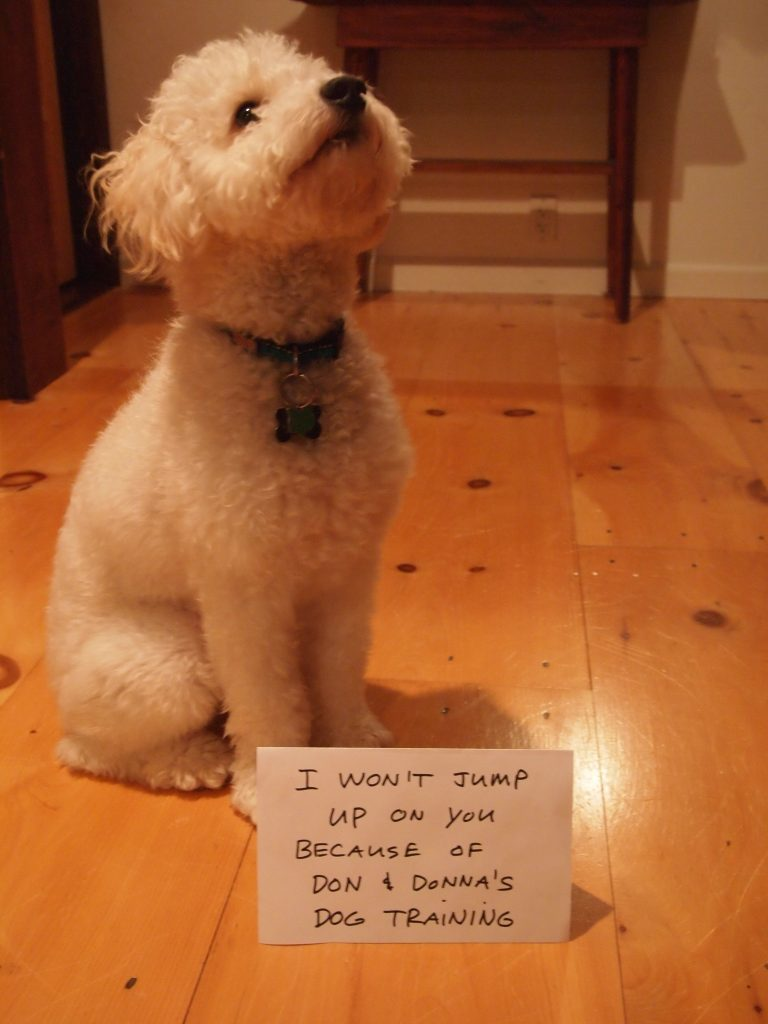 """Dog sitting behind sign """"I won't jump up on you because of Don & Donna's Dog Training"""""""