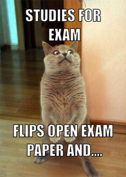 A cat meme about studying for a test